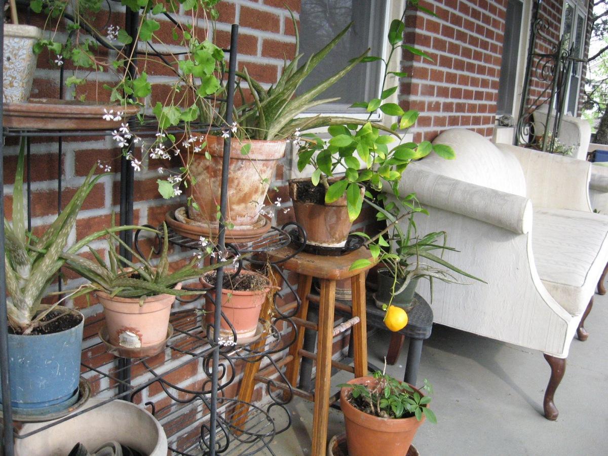 Homesharing Spotlight: Ed andOusmane
